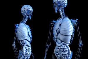 Listening: Partes del cuerpo que ya no usamos