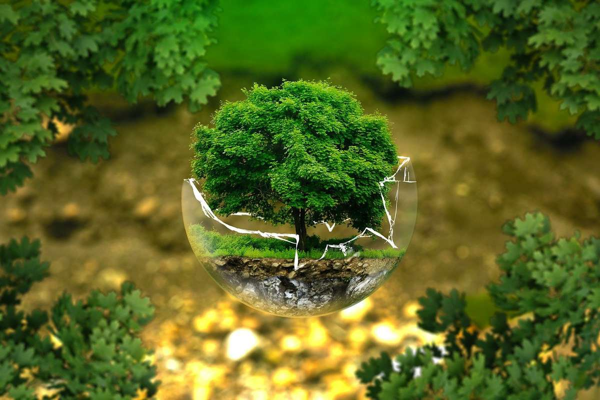 Conversation: The Environment