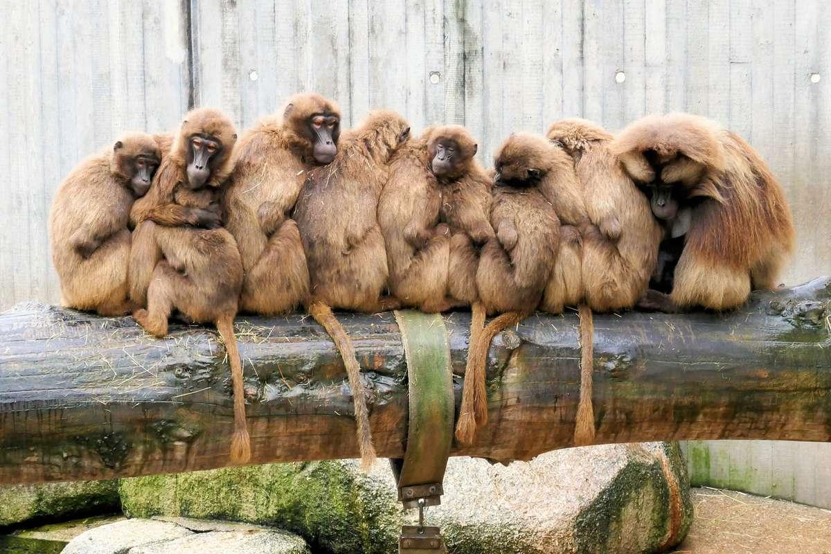 ¿Cómo es tu familia? (How is your family like?)